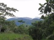 Sacha Q'ente con el bosque nublado al fondo