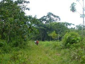 trabajos de reforestación