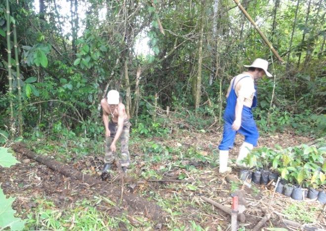 Pío y Phil trabajando en los semilleros